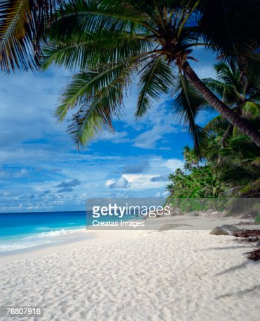 Beach seashore, Seychelles : Stock Photo