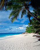 Beach seashore, Seychelles