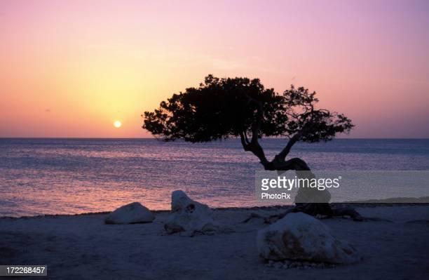 Praia ao pôr do sol em Aruba