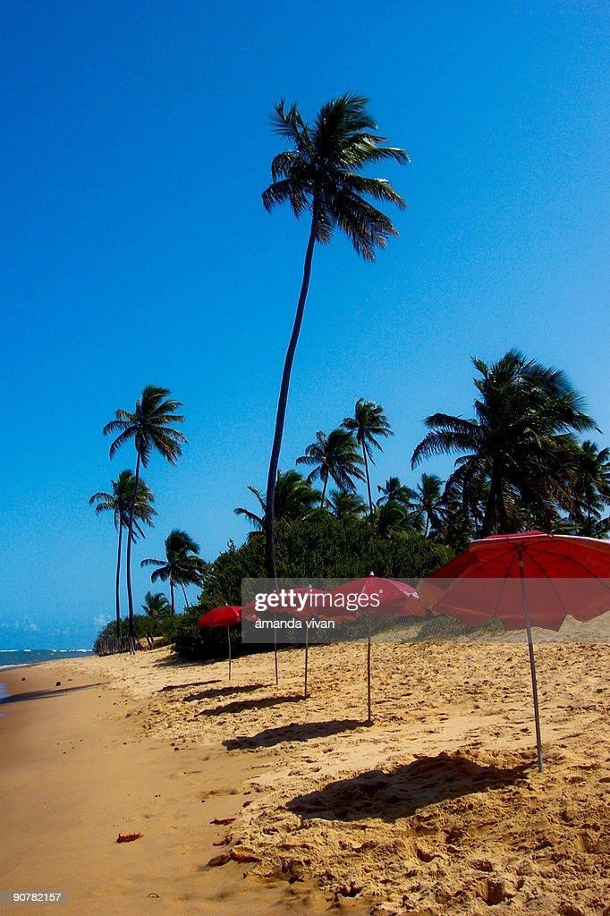 Beach umbrellas : Stock Photo