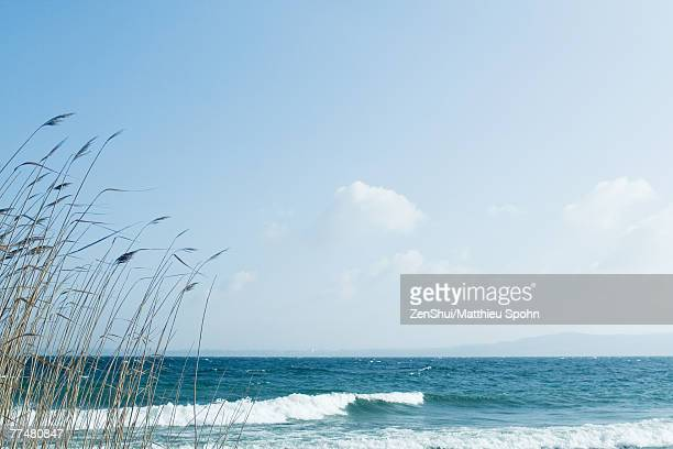 Beach with grasses growing in foreground