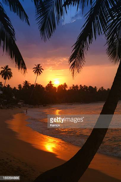 beach with palm in sunset