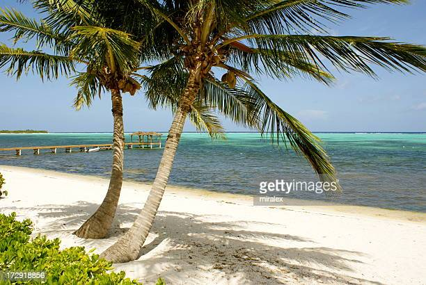 A beach with palm trees on Little Cayman island