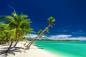 Tropical beach with coconut palm trees over the lagoon on Fiji Islands