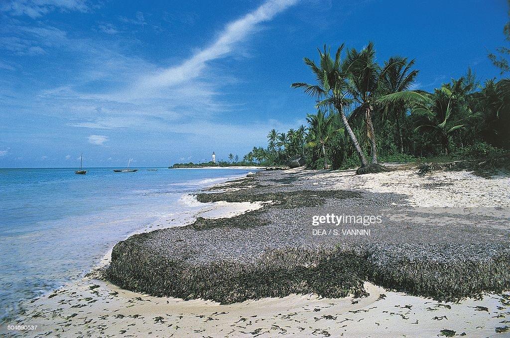 Beach with palm trees, Ras Nungwi, Zanzibar, Tanzania.