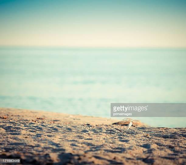 Beach with starfish overlooking the ocean