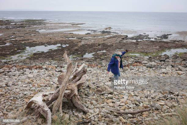 A beachcomber trips on a rock while exploring the northern shore of Holy Island on 27th September 2017 on Lindisfarne Island Northumberland England...