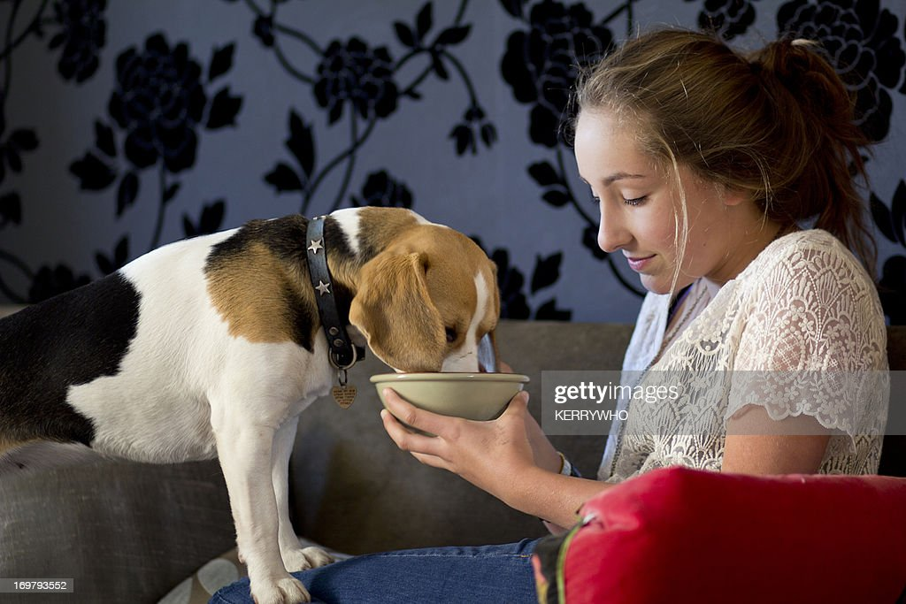 Beagle and teenage girl share from a bowl : Stock Photo