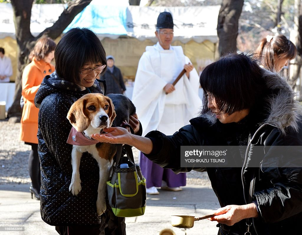 A beagle, held by its owner, has its mouth washed before a purification ceremony by a Shinto priest (C) at the Ichigaya Kamegaoka-Hachiman shrine in Tokyo on January 13, 2013. Some 500 pets and their owners visit at the shrine to celebrate for the New Yaer and pray for their animal's health and happiness. AFP PHOTO / Yoshikazu TSUNO