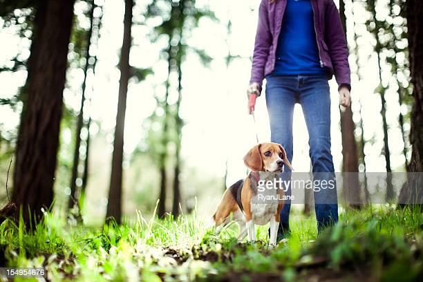 Beagle no passeio no Parque florestal