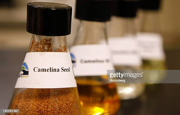 A beaker containing camelina seed is arranged for a photo at the Patuxent River Naval Air Station in Patuxent River Maryland US on Monday Feb 13 2012...