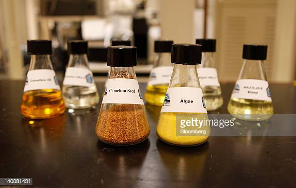 Beakers containing camelina seed and algae are arranged for a photo at the Patuxent River Naval Air Station in Patuxent River Maryland US on Monday...