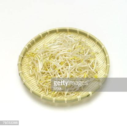 Bean sprouts : Stock Photo