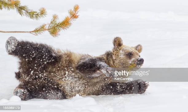 Bear Cub in Winter Snow