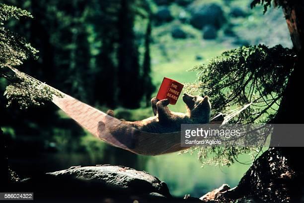 Bear in hammock reading 'The Three Bears'