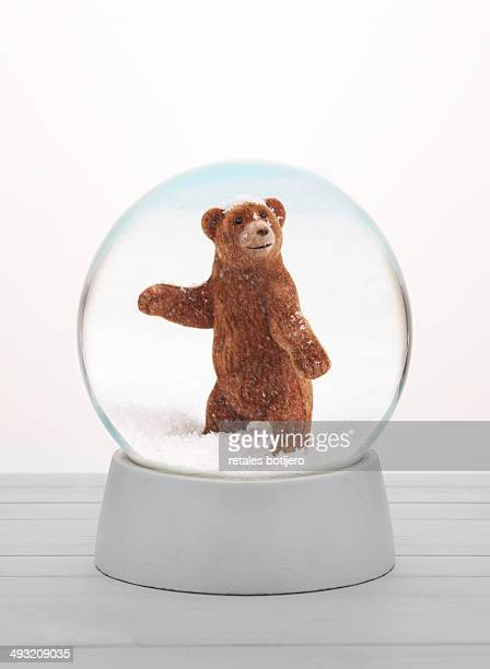Bear in snow globe