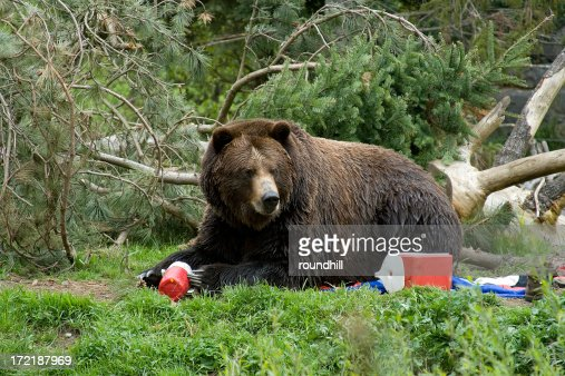 Bear Invading Campground