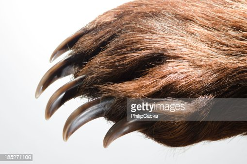 Bear Paw and Claws