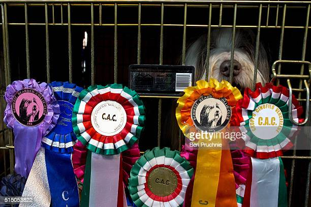 A bearded collie sits in a cage on the third day of Crufts 2016 on March 12 2016 in Birmingham England First held in 1891 Crufts is said to be the...