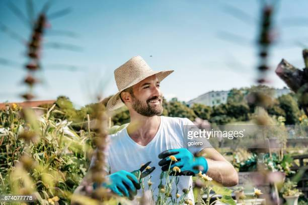 bearded handsome smiling man with straw hat cutting plant in summer garden