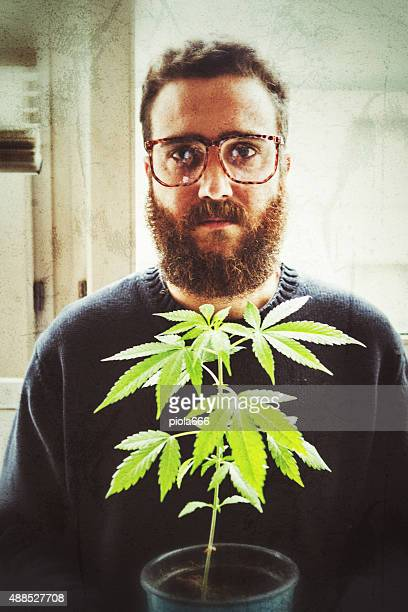 Bearded man portait: hipster holding hemp plant