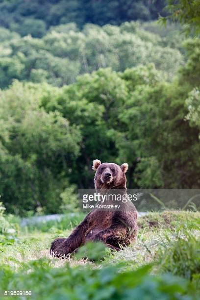 Bears yoga