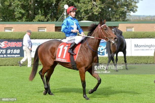 Beau Mertens returns to the mounting yard on Watego's Beach after winning the Mornington Auto Group Plate at Mornington Racecourse on April 16 2017...