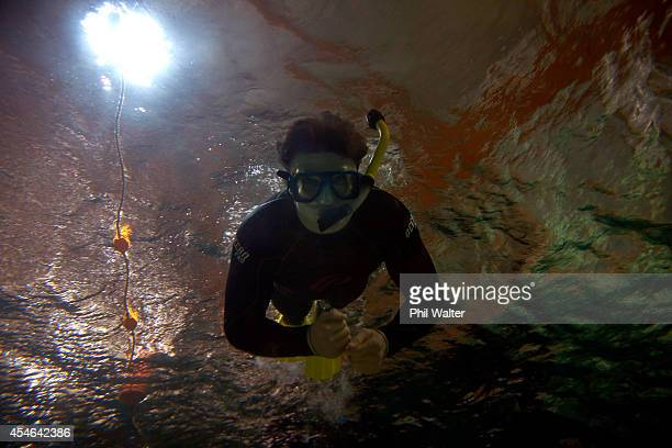 Beauden Barrett of the All Blacks swims amongst the marine life during a New Zealand All Blacks visit to the National Aquarium on September 5 2014 in...