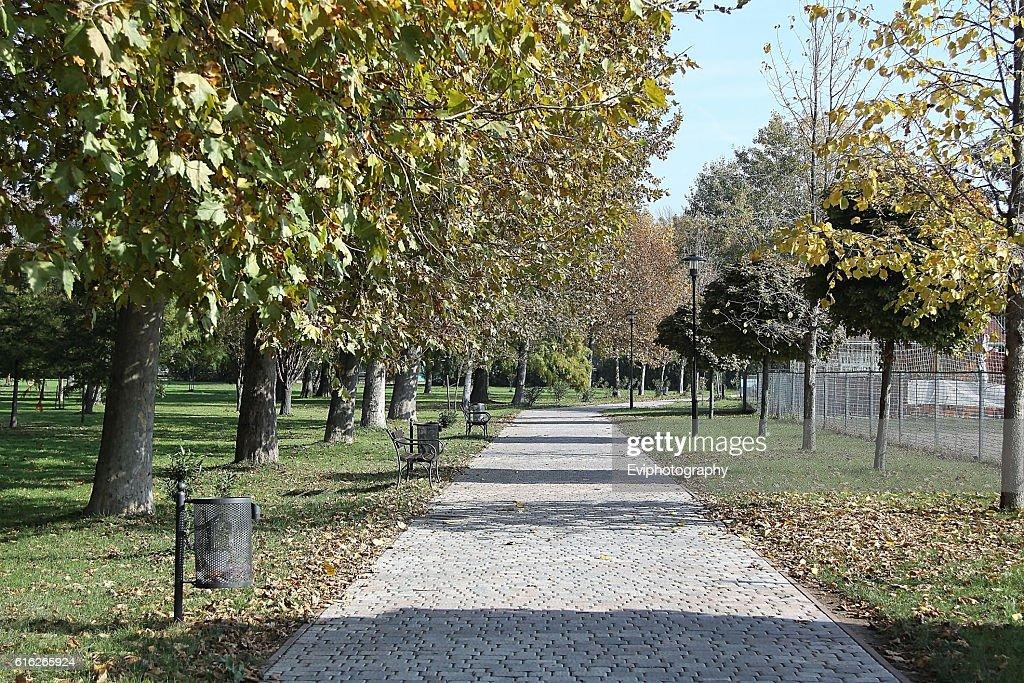 Beautiful autumn park : Stock Photo