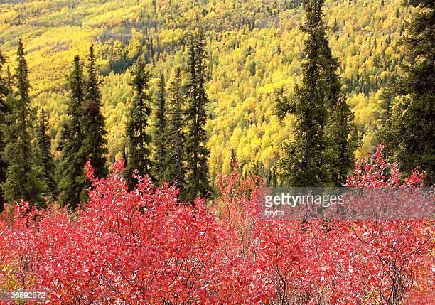 Beautiful autumnal colors in the Yukon Territory,Canada