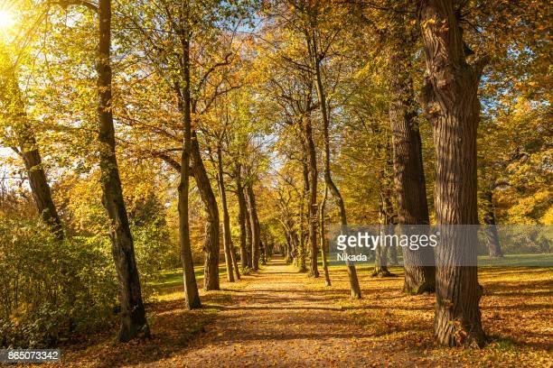 Beautiful Autumnal park path