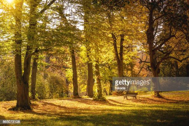 Beautiful Autumnal park with bench