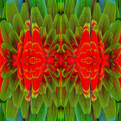 Beautiful Background Pattern made from Red ang Green Macaw bird feathers