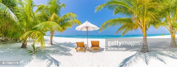 Beautiful beach panorama with palm trees