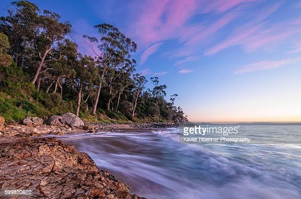 Beautiful Boronia Reserve | Southern Tasmania