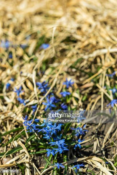 Beautiful bright day in early spring, sun-lit clearing in the forest with spring flowers.