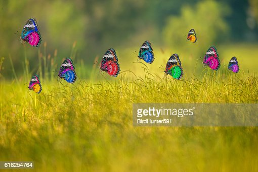 Hermosas mariposas : Foto de stock