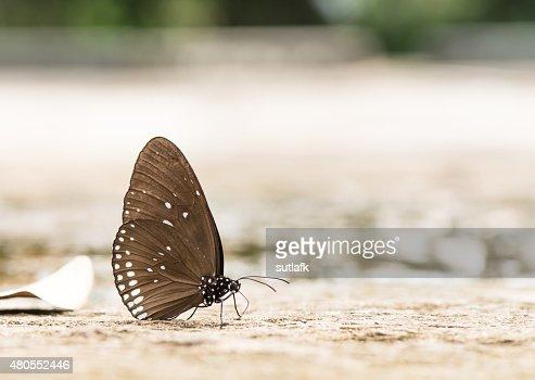 Hermosa mariposa en las rocas cerca de agua de la naturaleza : Foto de stock