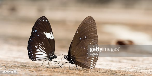 beautiful butterfly on the rocks near water nature : Stock Photo