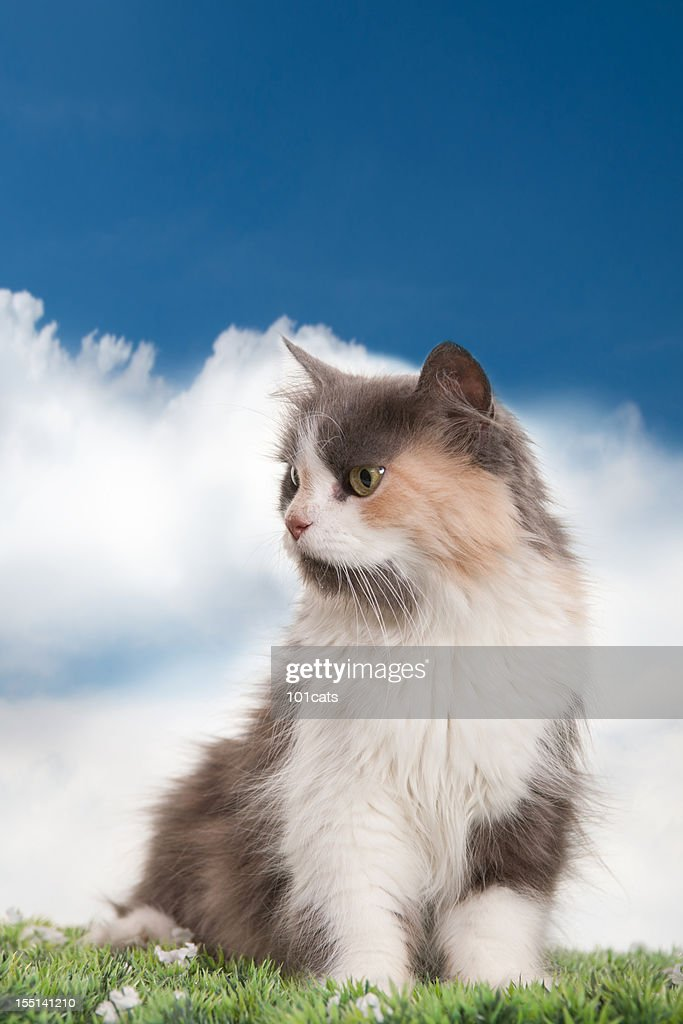 beautiful cat : Stock Photo