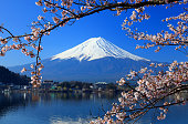 Beautiful cherry blossoms with Mount Fuji, japan