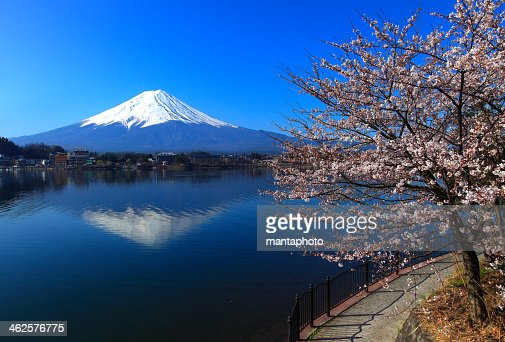 Beautiful cherry blossoms with Mount Fuji