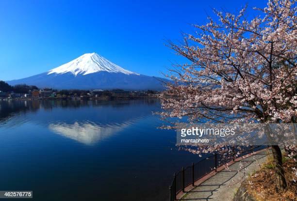 美しい桜、富士山