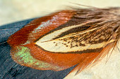 Beautiful Closeup feathers in soft and blur style for the background