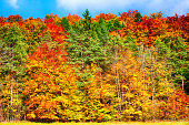 beautiful colorful forest in autumn on a sunny day