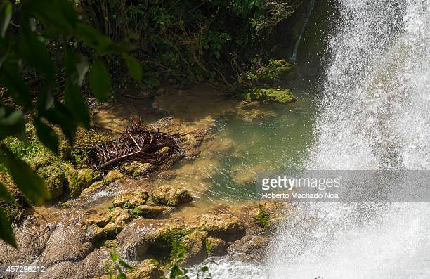 Beautiful countryside waterfall in the Cuban mountains El Nicho was an area for guerrilla warfare training and now it is a tourist park because of...