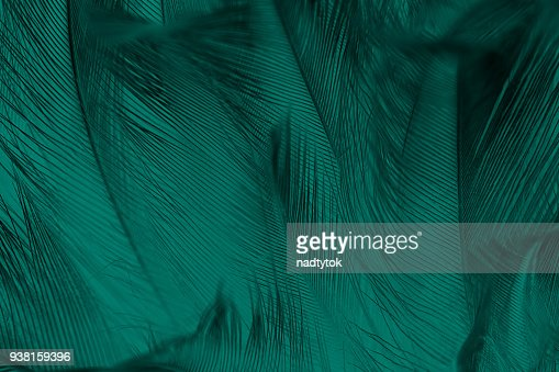 Beautiful dark green vintage color trends feather texture background : Stock Photo
