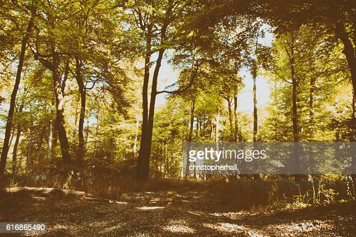 Beautiful English woodland on a spring morning : Stock Photo