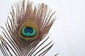Beautiful exotic peacock feathers on white background