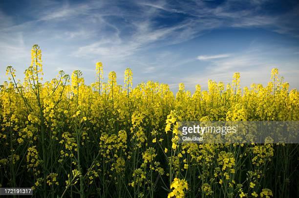 Bela campos de Primavera